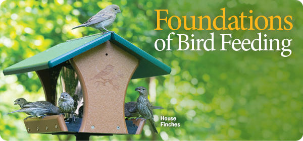 Wild Birds Unlimited   Discover a Refuge In Your Own ...