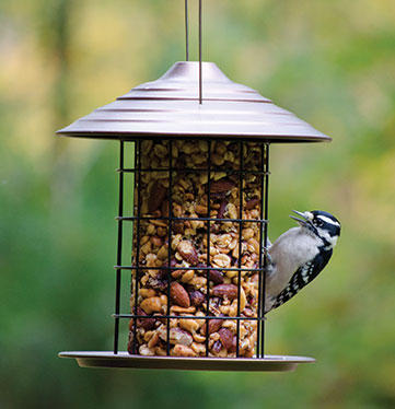 Seed Cylinder Bird Feeder with Downy Woodpecker